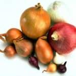 Alimentos de outono: Cebolas