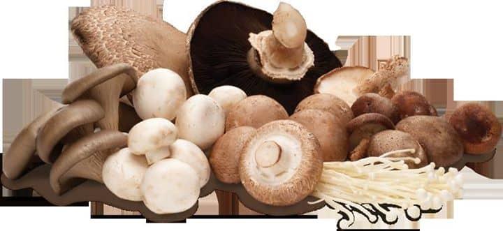 Torrada com cogumelos